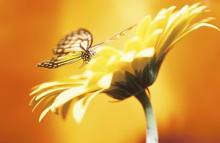 butterfly_flower.jpg